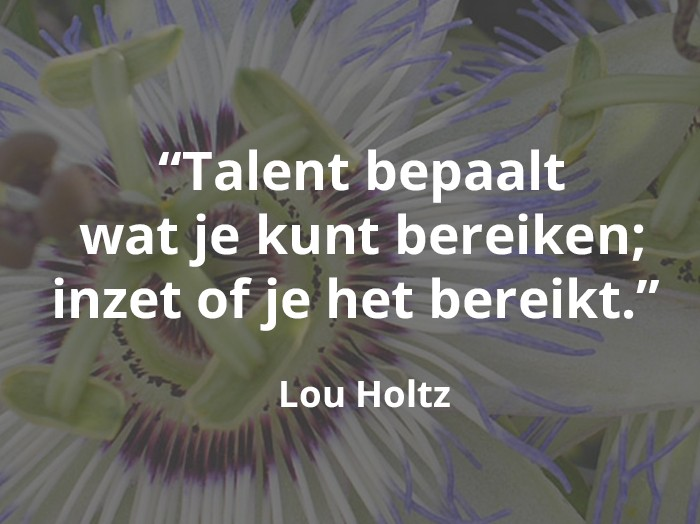 Talentmanagement, talenontwikkeling, DIMO, HRMax, RheiGroup